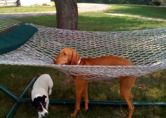 Funny Blunders Done By Dogs