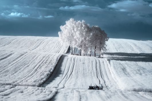 The Mesmerising Beauty Of Trees In Poland