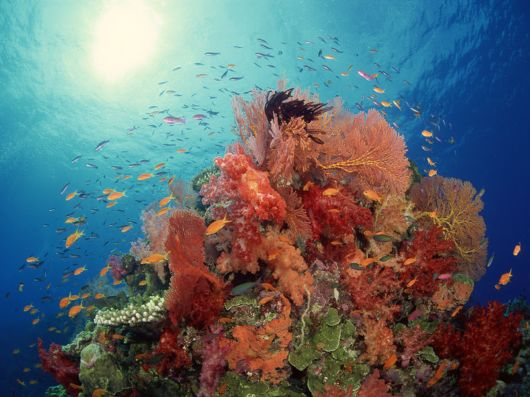 The Beauty Of The Underwater World