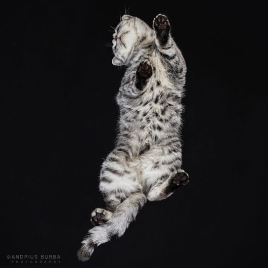 Amazing Photography Of Cats From Underneath