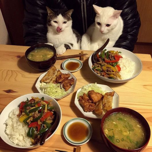 Japanese Couple Capture Their Cute Cats Hilarious Reactions Every Time They Eat