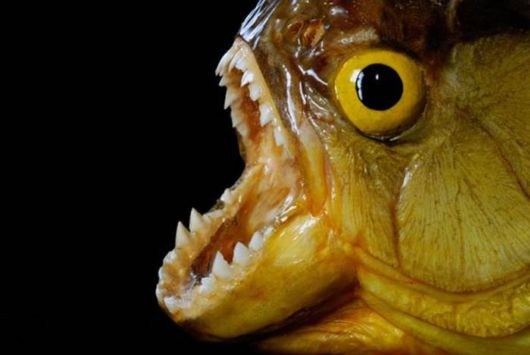 Scariest Freshwater Animals By Nat Geo