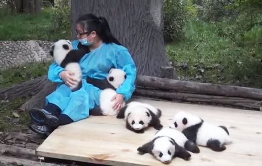 Hugging Pandas Is The Worlds Highest Paid Job